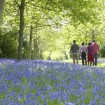 Family Bluebell Walk – Friday 5th May 2017 🗓