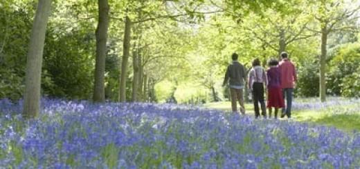 Bluebell-Walk