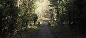 Dawn Chorus Walk 2015 @ Dunmore Woods | Laois | Ireland
