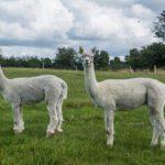 Castleview Open Farm opens in Cullohill